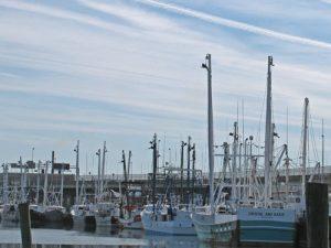 Newport News Seafood Industrial Park